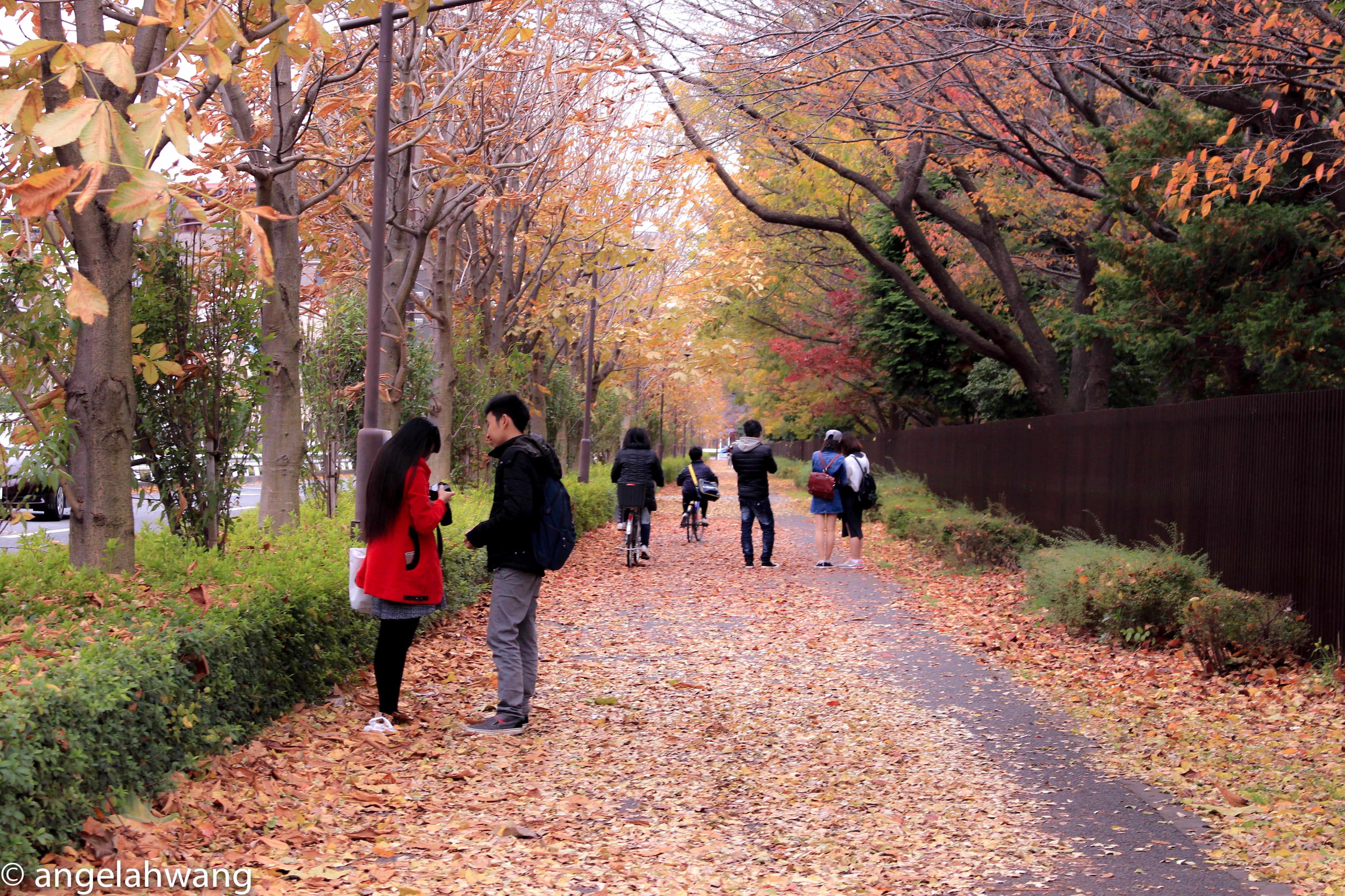 Tachikawa Fall Foliage